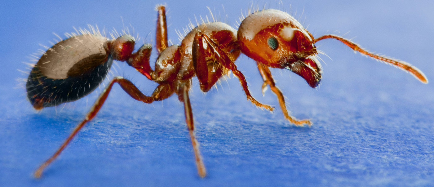 WE CAN HELP ELIMINATE ALL PESTS